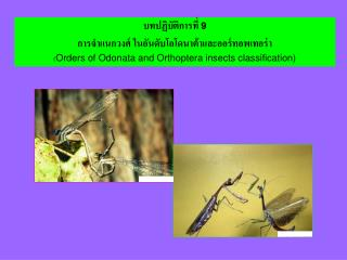 9   Orders of Odonata and Orthoptera insects classification