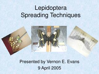 Lepidoptera Spreading Techniques