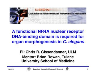 A functional NR4A nuclear receptor DNA-binding domain is required for organ morphogenesis in C. elegans