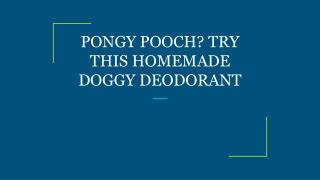 PONGY POOCH? TRY THIS HOMEMADE DOGGY DEODORANT