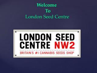 Brasil X Kc Cannabis Seeds From Kc Brains