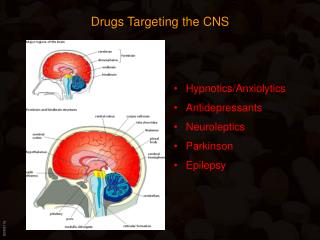 Drugs Targeting the CNS