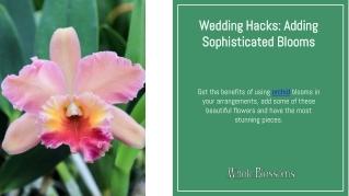 Make Your Decoration Unique with Wholesale Orchids
