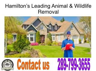 Hamilton Wildlife Removal Services