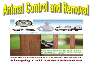 Pest Control And Wildlife Removal Service