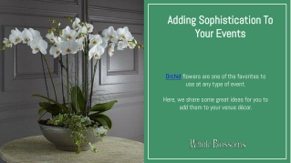 Add a Touch of Sophistication in Decor with Wholesale Orchids