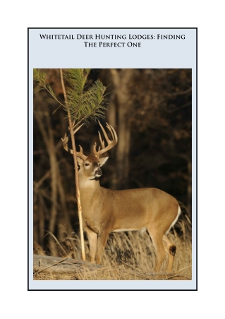 Whitetail Deer Hunting Lodges: Finding The Perfect One