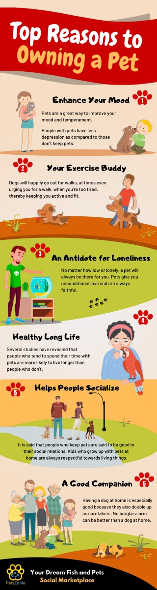 Reasons Why Keeping a Pet Is a Good Idea