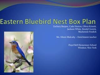 Eastern Bluebird Nest Box Plan