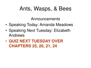 Ants, Wasps, & Bees
