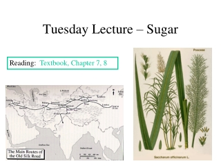 Tuesday Lecture – Sugar