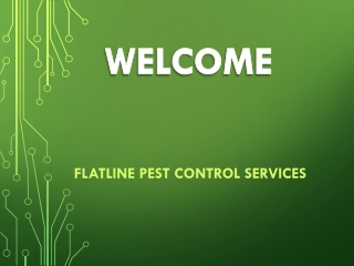 Best Rodent Inspections in Gosford