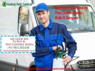 Get Pest Free Home by Pest Control Noida, Delhi & Gurgaon
