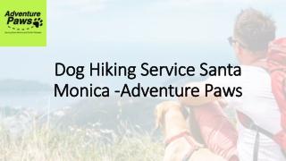 Dog Hiking Service Service in Santa Monica