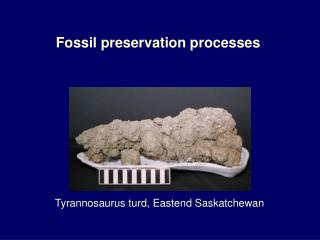 Fossil preservation processes