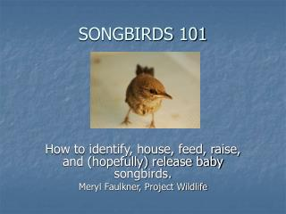 SONGBIRDS 101