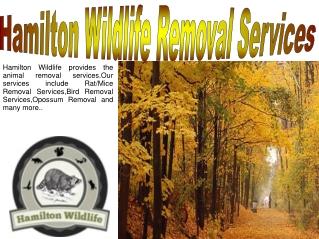 Wildlife Removal Welland