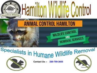 Hamilton Wildlife Control