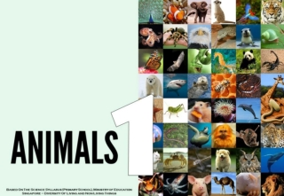 Science - All About Animals