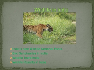 Get a Glimpse of Wildlife Sanctuaries in India