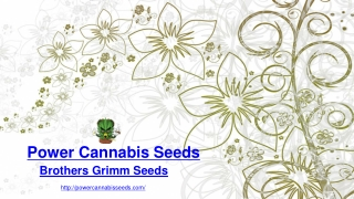 Buy Brothers Grimm Cannabis Seeds | Power Cannabis Seeds