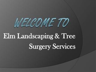 Arborist & Tree Surgeon in Ennis