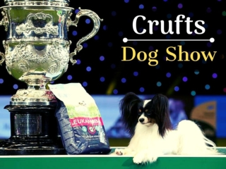 Crufts Dog Show 2019