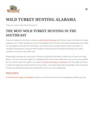 WILD TURKEY HUNTING ALABAMA