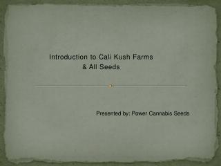 Buy Cali Kush Farms Seeds | Cannabis Seeds in London