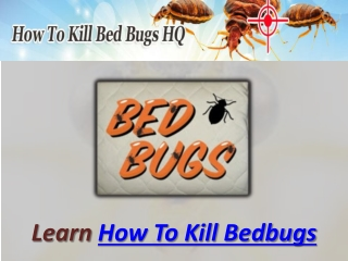 How To Kill Bedbugs