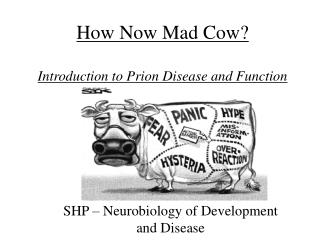 How Now Mad Cow?  Introduction to Prion Disease and Function