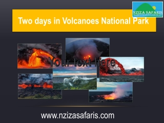 Amazing Traveling Experience With Nzizasafari