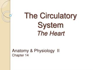 The Circulatory System The Heart