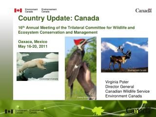 Virginia Poter Director General Canadian Wildlife Service Environment Canada