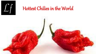 Hottest Chilies in the World