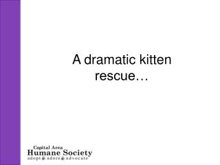 A dramatic kitten rescue…