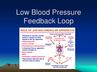 Low Blood Pressure Feedback Loop