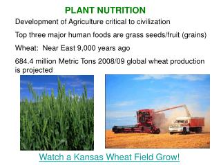 Watch a Kansas Wheat Field Grow!