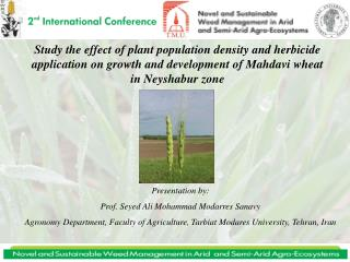 Study the effect of plant population density and herbicide application on growth and development of Mahdavi wheat in Ney
