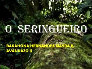 O SERINGUEIRO
