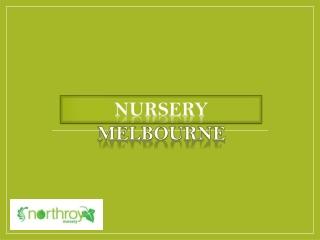 Nursery Melbourne | Plants, Pots, Garden Supply - Northroy Nursery
