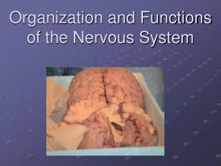 Organization and Functions of the Nervous System