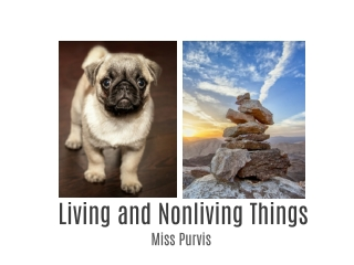 Living and Nonliving Things #4