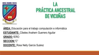 Práctica ancestral de Vicuñas
