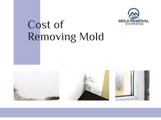 Cost of Removing Mold