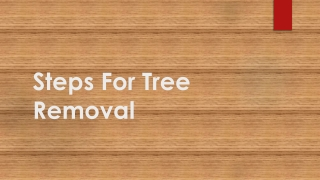 Steps For Tree Removal