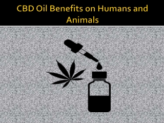Use CBD Oil to treat Human and Animal Disease