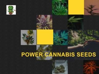 Cannabis Seeds Online | Afghan Selection Seeds | Marijuana Seeds Online