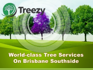World-class Tree Services On Brisbane Southside