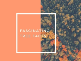Fascinating Tree Facts